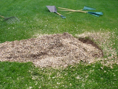 how to clean up after stump grinding-0