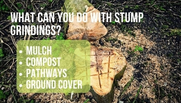 how to clean up after stump grinding-1