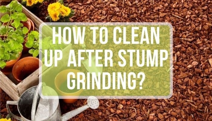 how to clean up after stump grinding-3