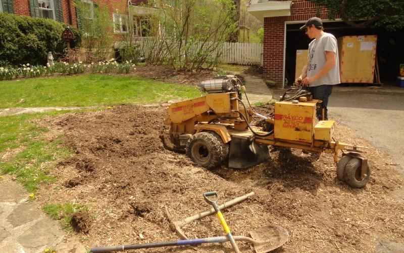 how to clean up after stump grinding-4