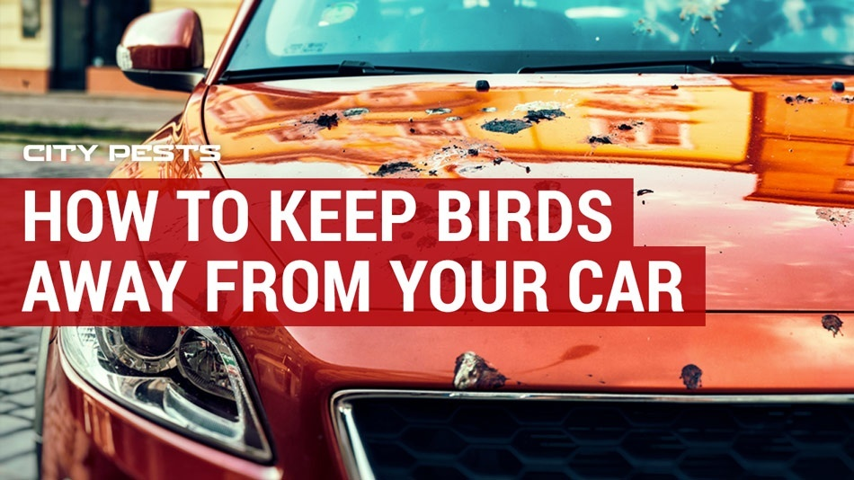 how to keep birds away from car-0
