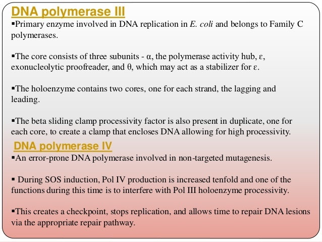 in e. coli, what is the function of dna polymerase iii?-2