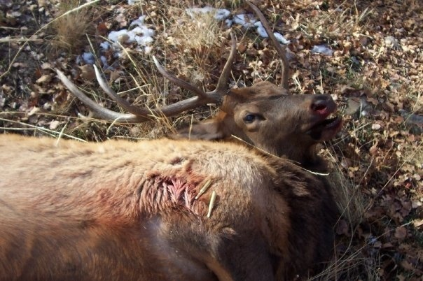 which of the following should be done by a hunter who is tracking a wounded animal?-1